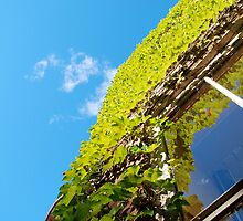 ivy on building in South End of Boston by colleenboston