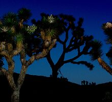 Darkness Falls at Joshua Tree by Laurie Search