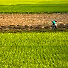 Rice by Jeff Harris