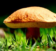 Under the Mushroom by Sandy Woolard
