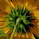 Sunflower I by Pamela Hubbard
