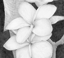 plumeria flowers by pattilee