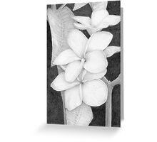 plumeria flowers Greeting Card
