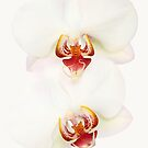 Orchids by Brian Haslam