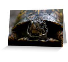 eastern box turtle (terrapene carolina) Greeting Card