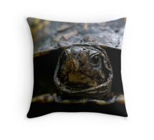 eastern box turtle (terrapene carolina) Throw Pillow
