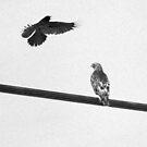 EAT  Crow......  by Larry Llewellyn