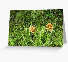 lillies Greeting Card