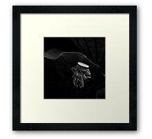 Lotus Framed Print