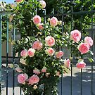 Lovely rose garden by bubblehex08
