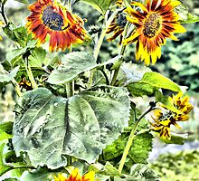 Sunflower by Catherine Hamilton-Veal  ©