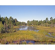 Swampscape View iN Northern Ontario Photographic Print