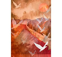 Gulls Overflying Downland Photographic Print