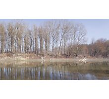 Line of Trees at Backwater Photographic Print