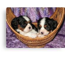 Cavalier Pups In Basket Canvas Print