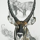 Waterbuck by BarbBarcikKeith