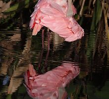Roseate Spoonbill by Gail Falcon