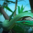 Green Tree Snake by doorfrontphotos