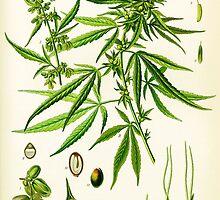 Marijuana by Vintagee