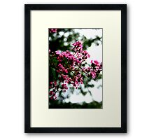 Pretty Blossoms Framed Print