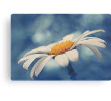 Hazy Daisy Canvas Print