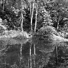 Reflection by CarolM