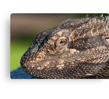 Bearded Dragon close up! Canvas Print