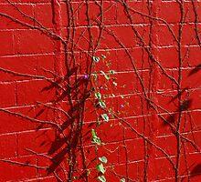 Clinging to Crimson by Steve Mezardjian