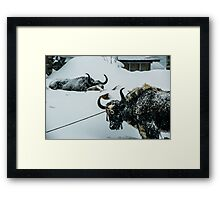 Yak Life IV Framed Print