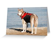REST IN PEACE BABY DOG! Greeting Card