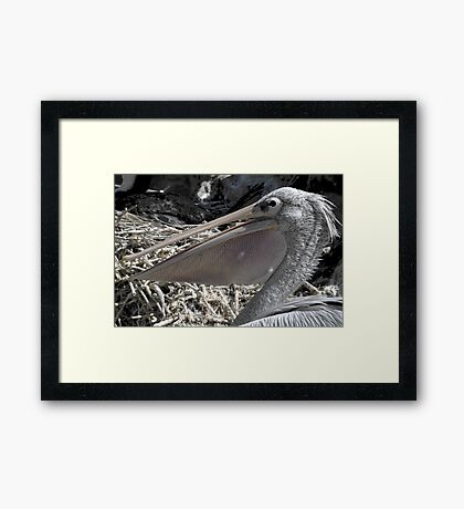 Pelican Pouch 1 Framed Print