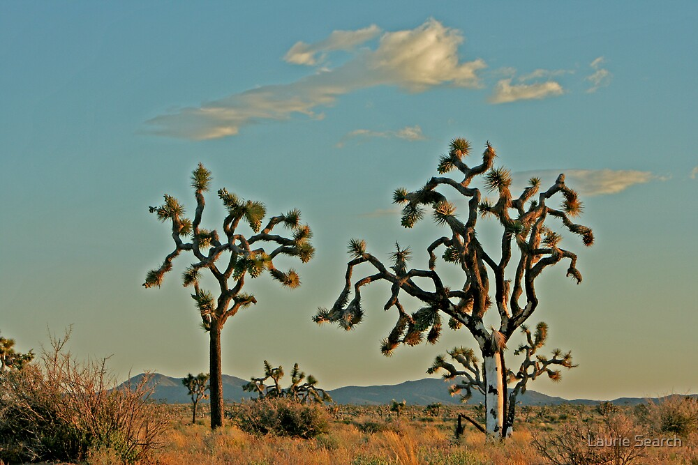 The Desert is Wild by Laurie Search