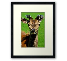 Fearless Deer Framed Print