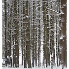 Tall Trees with Greeting by Judi FitzPatrick