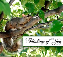Thinking of You Squirrel by Sheryl Kasper