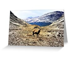 now feel the stag Greeting Card