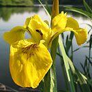 Mellow Yellow by Maureen Brittain
