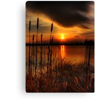 bullrush Sunset Canvas Print