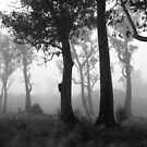 trees guarding the mist - b/w by gaylene
