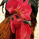 The Rooster by Virginia N. Fred