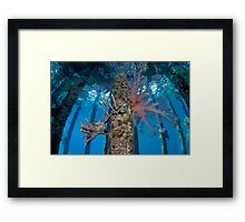 Finding Froggy Framed Print