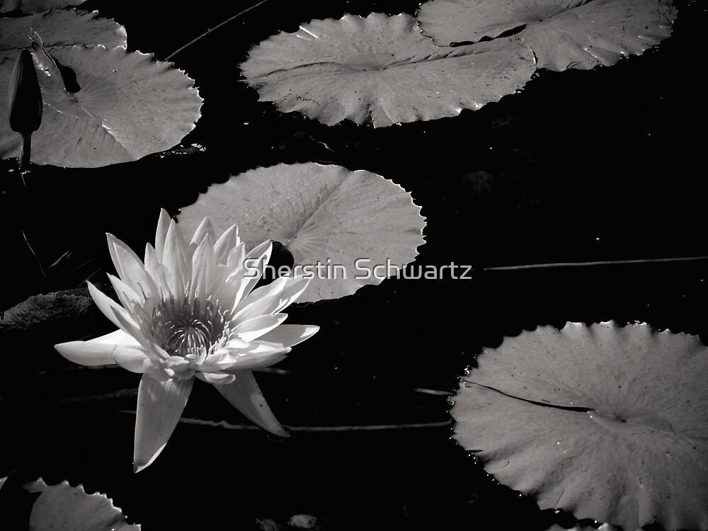 Japanese Garden.  by Sherstin Schwartz