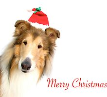Collie Santa Christmas Card by Jan  Wall