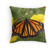 Strecthing her Wings and ready to go. Throw Pillow