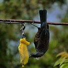 Breakfast for the Tui by Larry Lingard-Davis