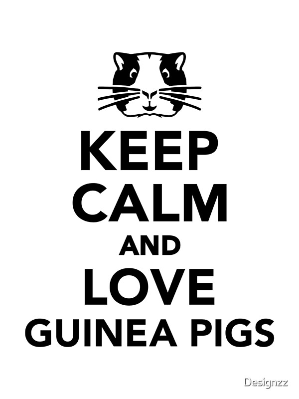 u0026quot keep calm and love guinea pigs u0026quot  art prints by designzz