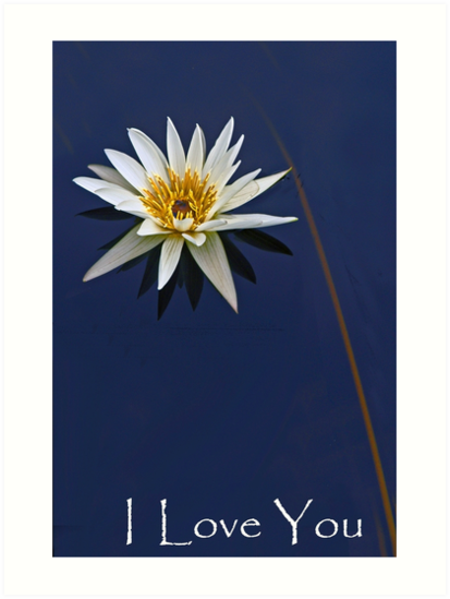 Waterlily Valentine Card by cclaude