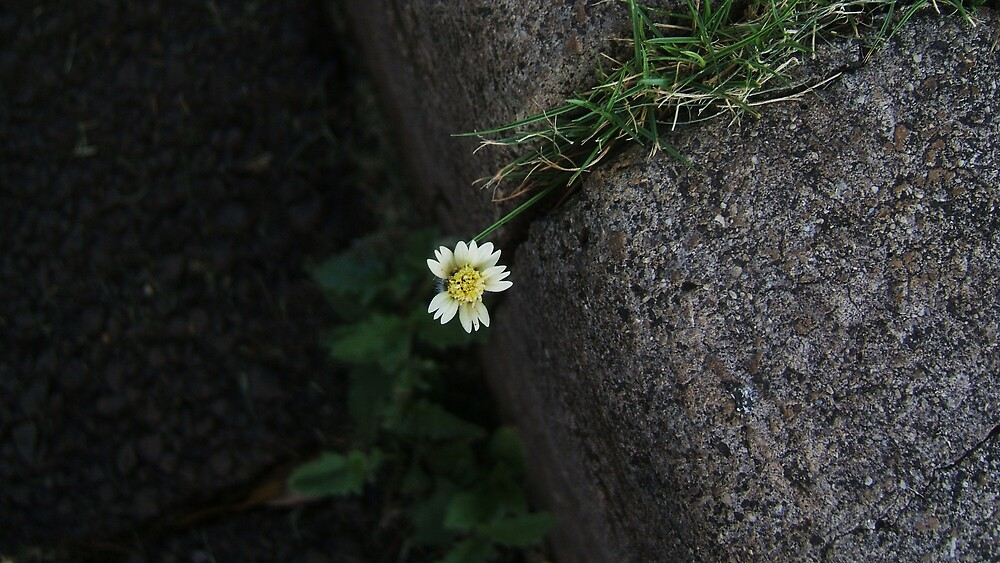 Sidewalk Flower by Barbara Morrison