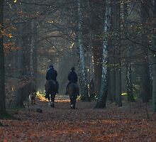 Riding in the dark autumnal forest by jchanders
