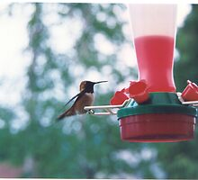 Hummingbird...Sicamous B.C. by gypsykatz